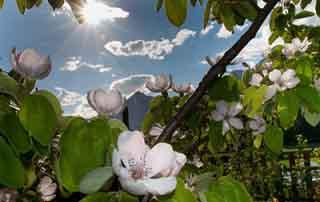 Get healthy with Hildegard Hotel Pirchner Hof Farm Reith Tyrol Austria