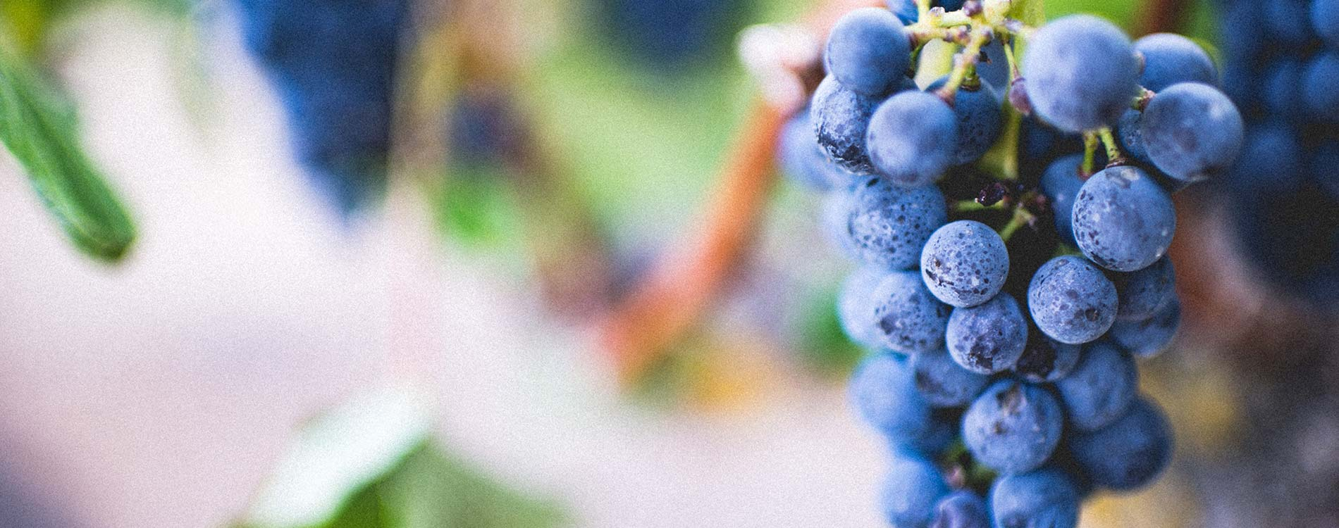 hotel and dinner deal - Niche Destinations 4-star-superior hotel GROSSARLER HOF wine grapes