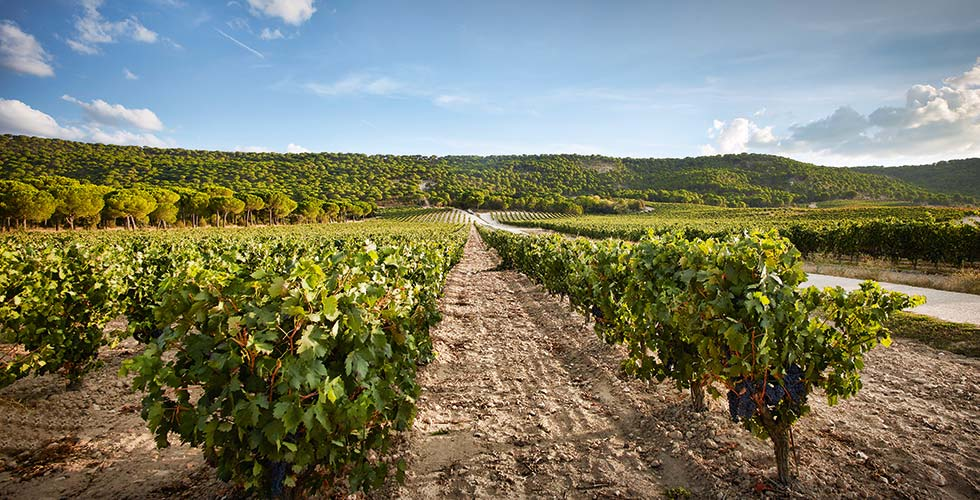 Wine Tasting SPA-Hotel Jagdhof Vega Sicilia Wineyards