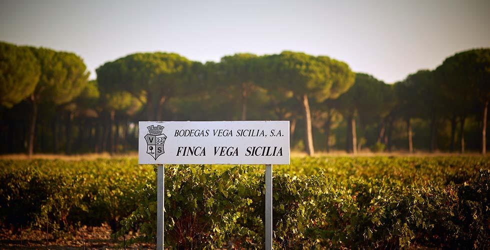 Wine Tasting SPA-Hotel Jagdhof Vega Sicilia