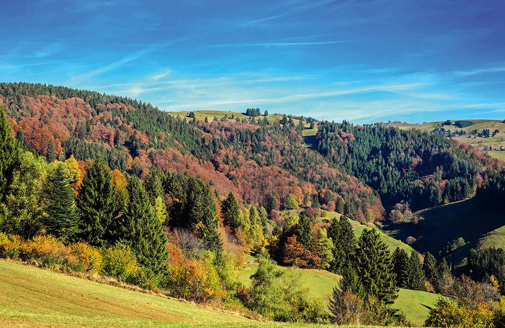 Black Forest national park Germany A world waiting to be discovered