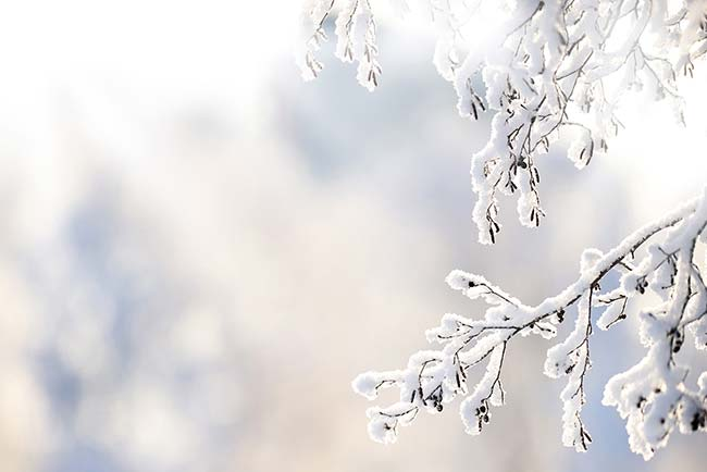 Winter depression: the causes and how to combat it