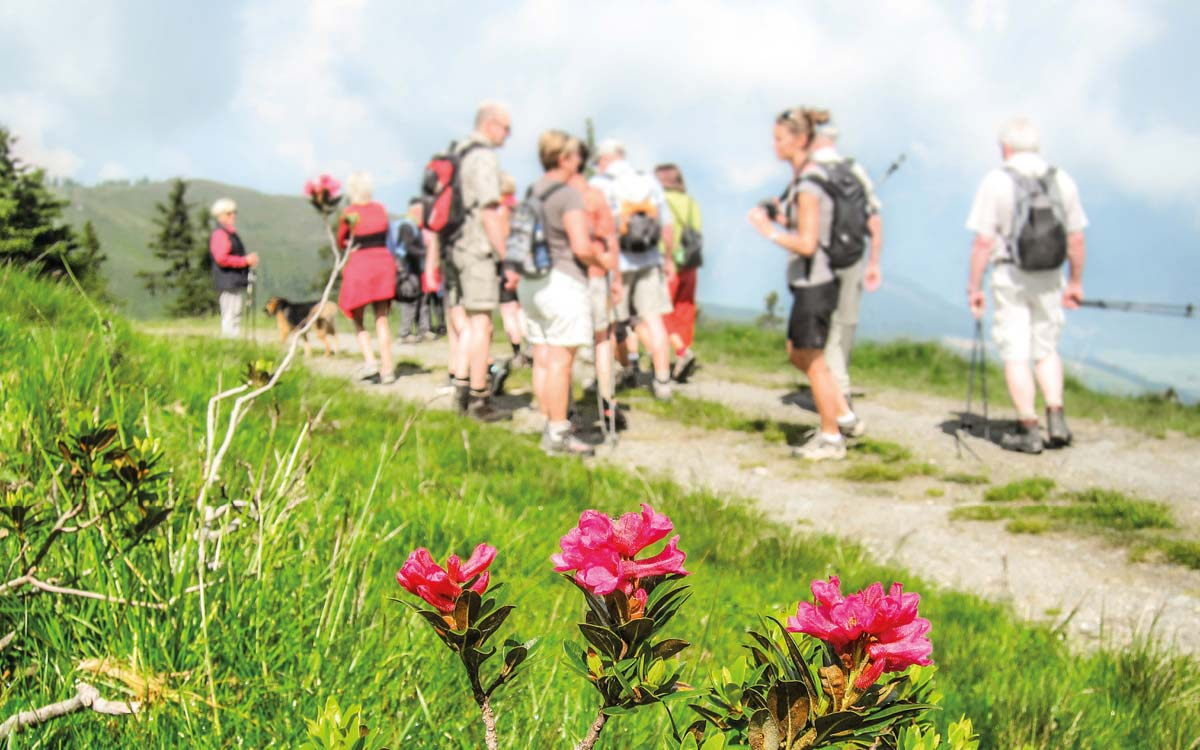 Hiking holiday in Austria_Mountain flora_1