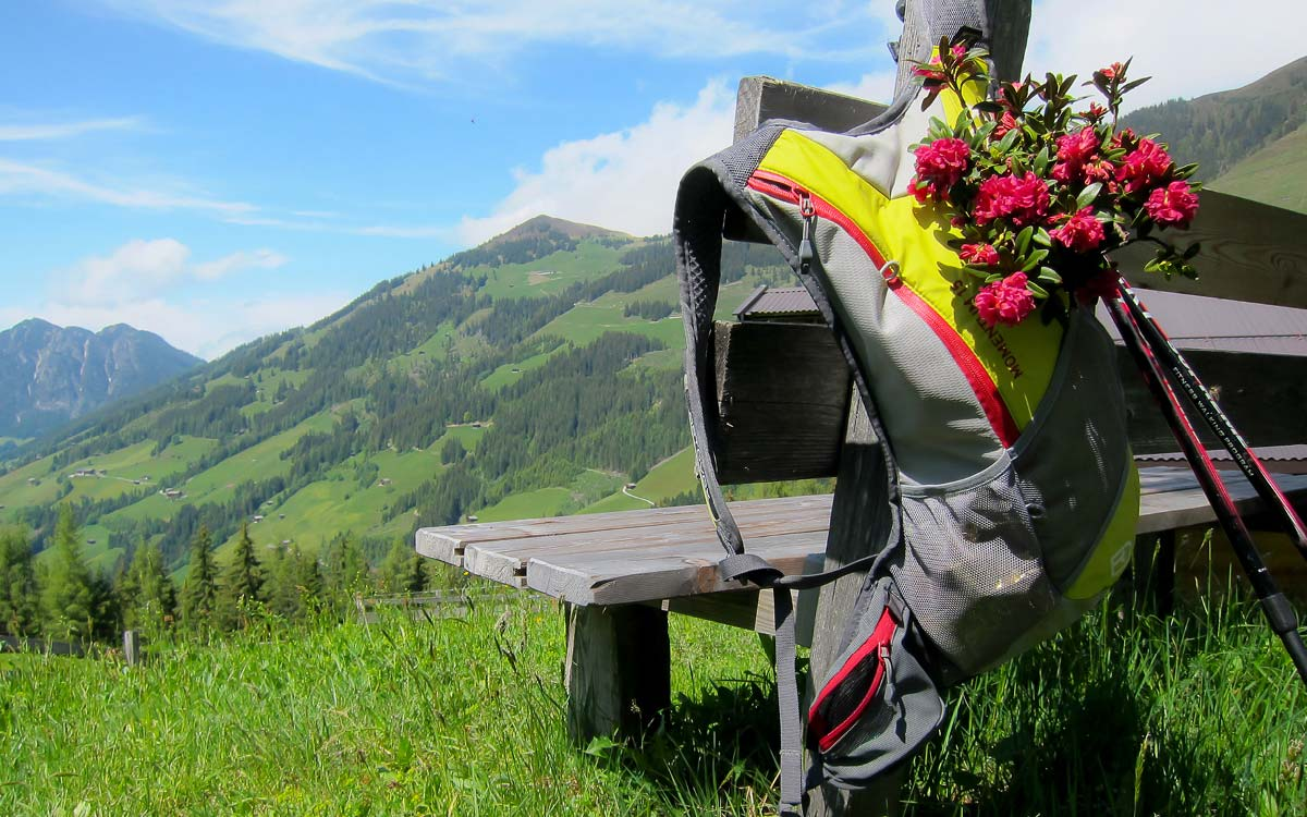 Hiking holiday in Austria_Mountain flora_3