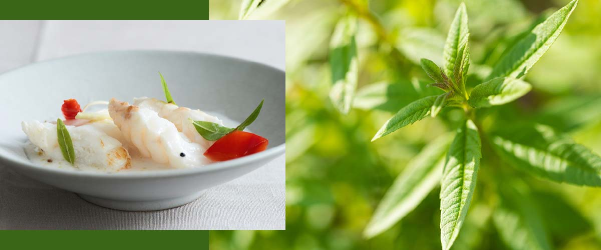ND_PI_Herbal recipes 2