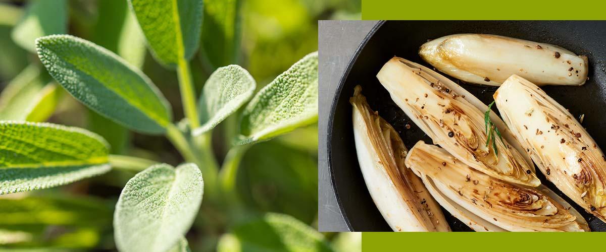 chicory herbal recipes
