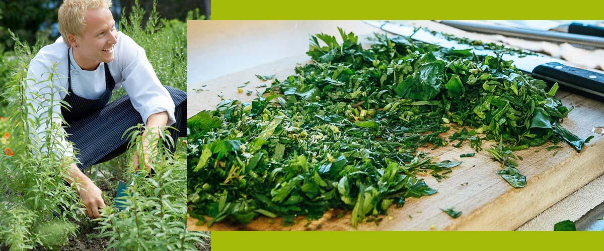 herbal recipes herbs