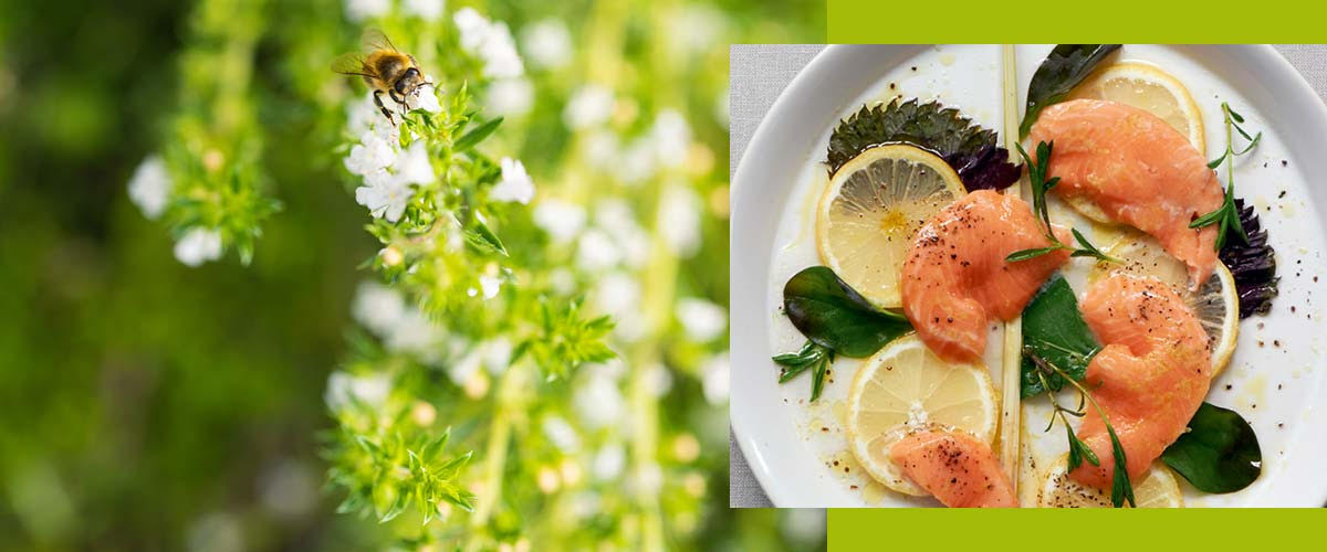 ND_PI_Herbal recipes_salmon and savory